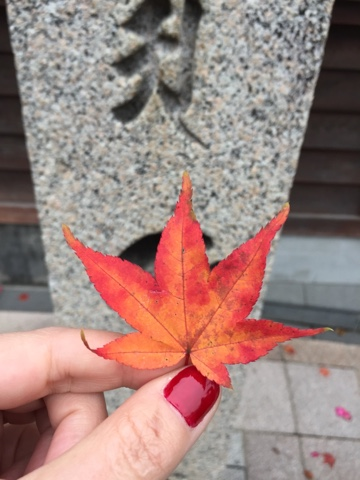 Fall is an amazing time of year to Visit Koyasan. It is cold enough to enjoy your sento and there are red leaves everywhere!