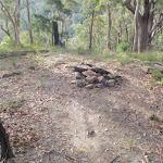 Flora Reserve Ridge rest area (59276)