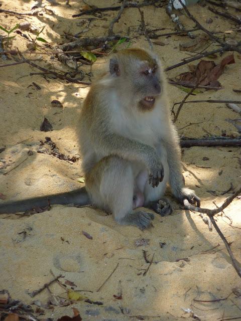 Blog de voyage-en-famille : Voyages en famille, ABC, la journée du singe
