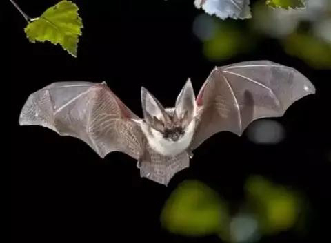 Pictures Of Animals believed To Have Rare Abilities In The Prediction Of Death - 1602592221151284 4 - Pictures Of Animals believed To Have Rare Abilities In The Prediction Of Death Pictures Of Animals believed To Have Rare Abilities In The Prediction Of Death - 1602592221151284 4 - Pictures Of Animals believed To Have Rare Abilities In The Prediction Of Death