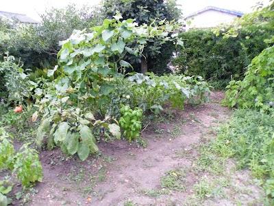 2010年7月28日の家庭菜園の様子