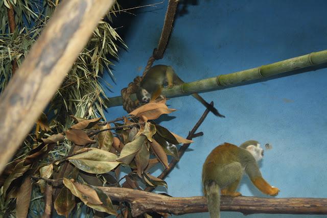 Zoo Snooze 2015 - IMG_7306.JPG