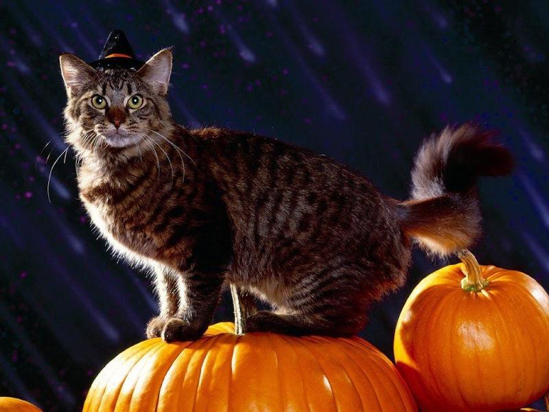 Wiccan Cat, Halloween