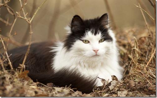 22 fotos de gats (31)