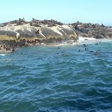 Seals on Druikin Island