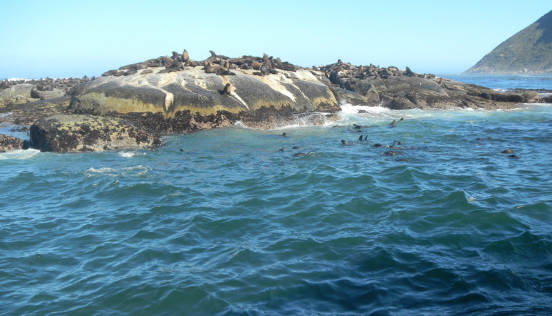 Seals on Druikin Island