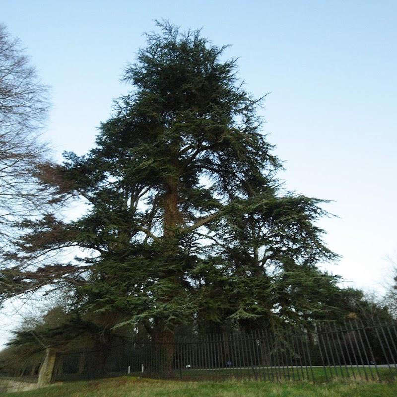 Stowe_Trees_29.JPG
