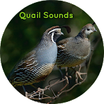 Quail Nature Sounds icon