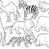animales-2.jpg
