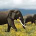 OMG :तमिलनाडु में जहा हाथियों की होती है देखभाल वहां पर दो  महावतों ने  की हाथी की राक्षशो  की तरह पिटाई