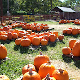 Pumpkin Patch - 114_6529.JPG