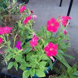 Gardening 2012 - 115_2619.JPG