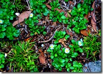 GroundCover-001