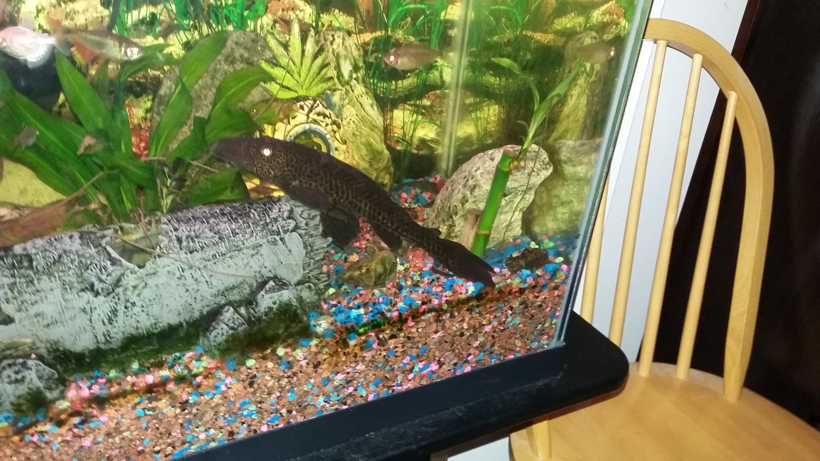 Fish - 20160917_205532.jpg