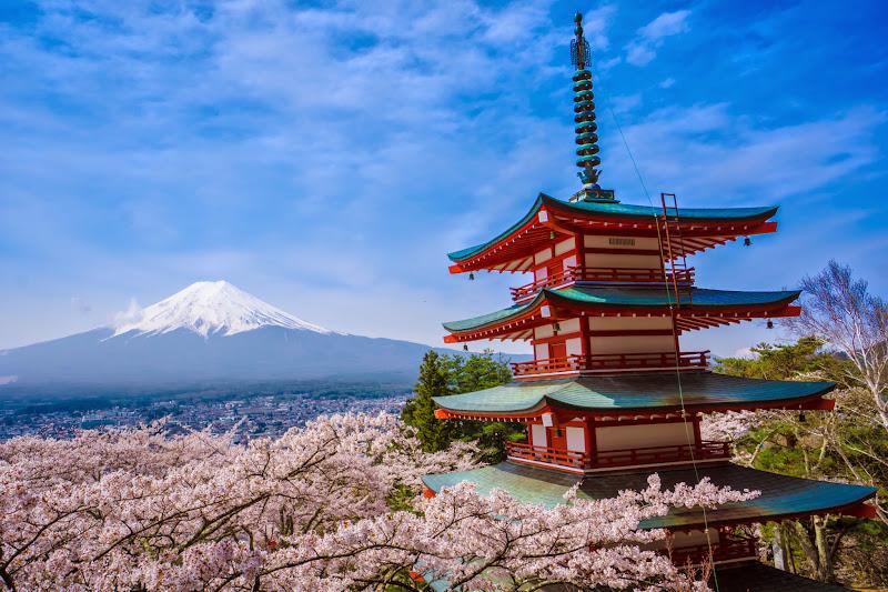 新倉富士浅間神社 桜 富士山 写真4