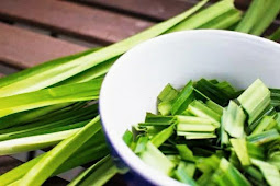 28 manfaat daun pandan untuk kesehatan
