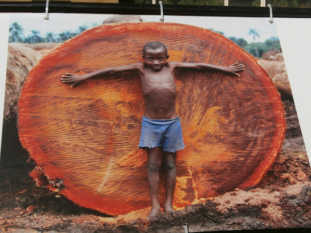 Young boy in front of huge cut tree