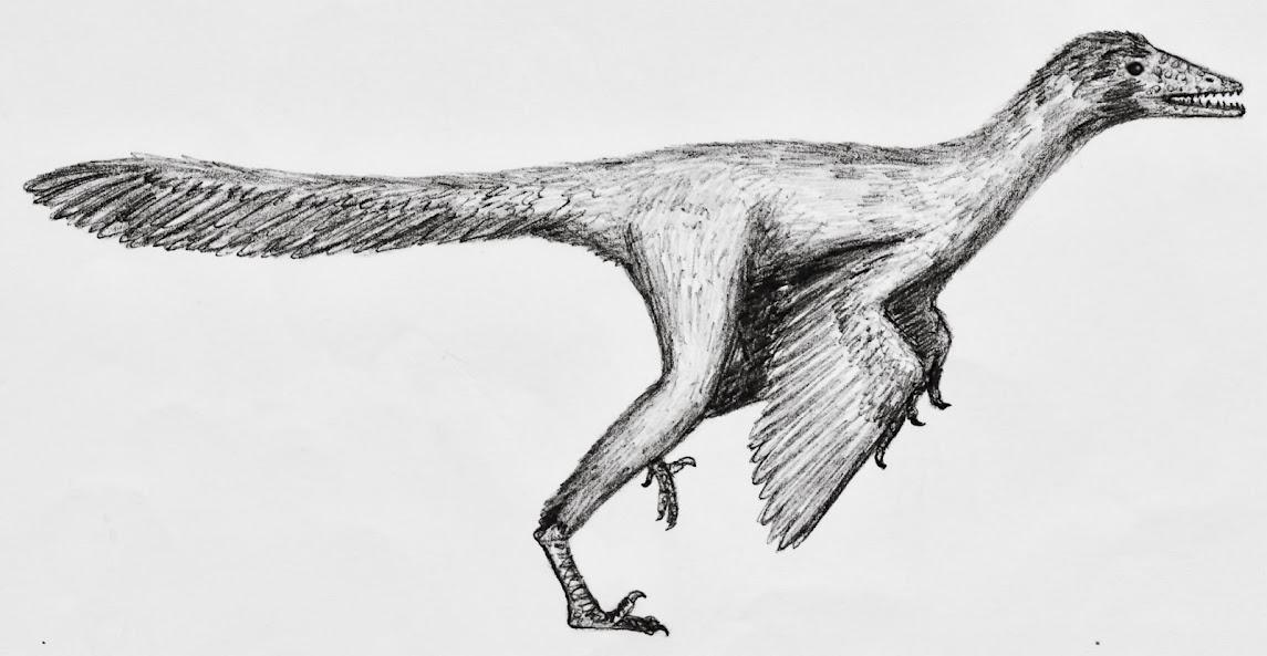 eure dinosaurier-Bilder - Seite 2 Aurornis_xui