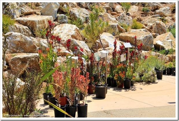 160813_UCSC_Arboretum_258