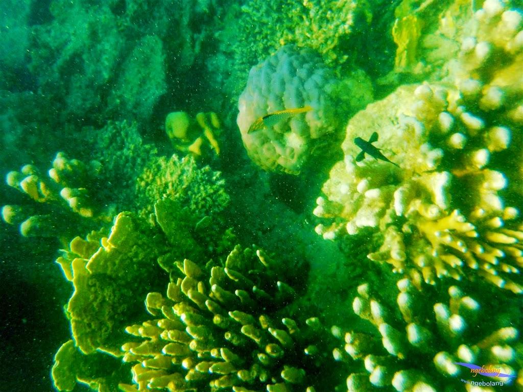 pulau harapan, 23-24 mei 2015 olympus 05
