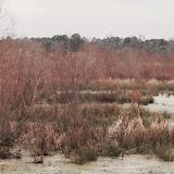 Anderson Creek Hunting Habitat - photo44.JPG