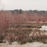 Anderson Creek Hunting Habitat - photo44.JPG