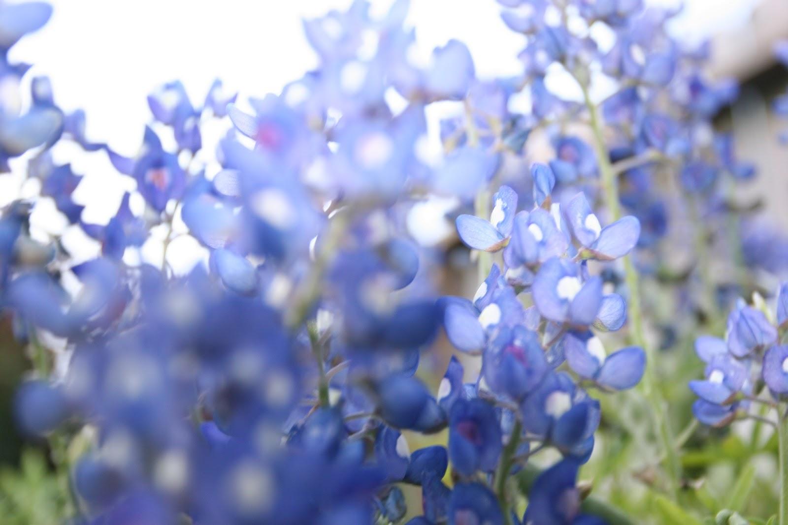 Gardening 2012 - IMG_2791.JPG