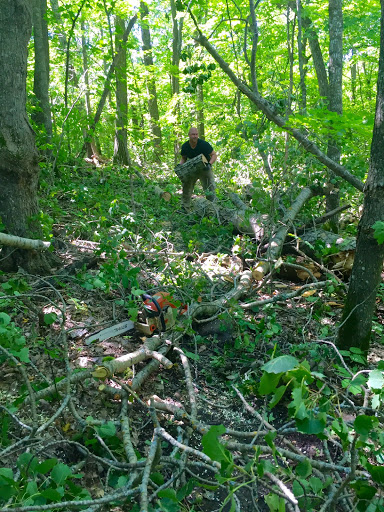 Clearing trail! Lots of big tops down...right on the trail! Thanks for your help Collin.