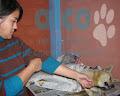 campaña esterilizacion VES 2008 (9)