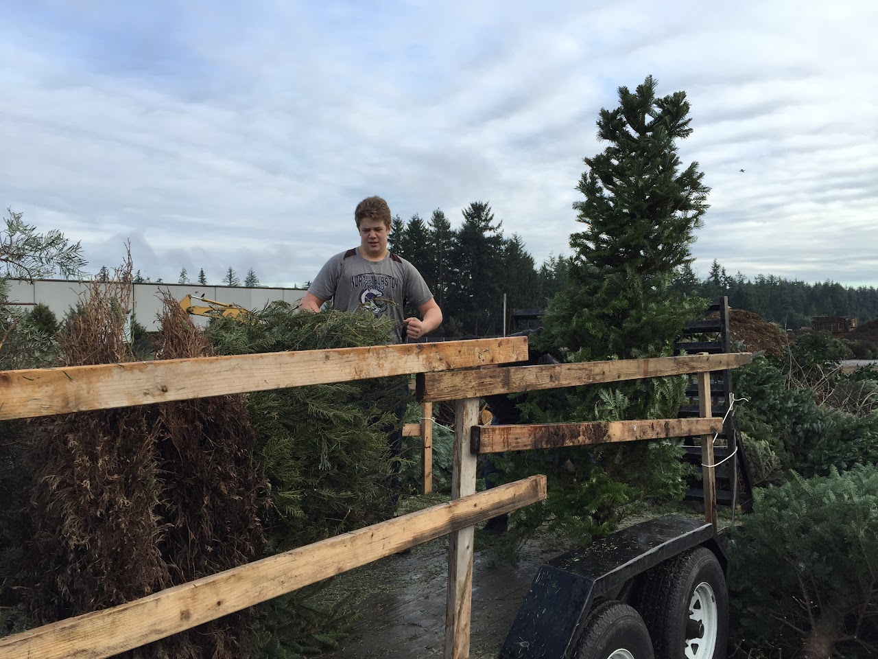 Christmas Tree Pickup - January 2016 - IMG_5733.JPG