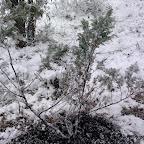 Зимняя уборка в Дендрарии 009.jpg