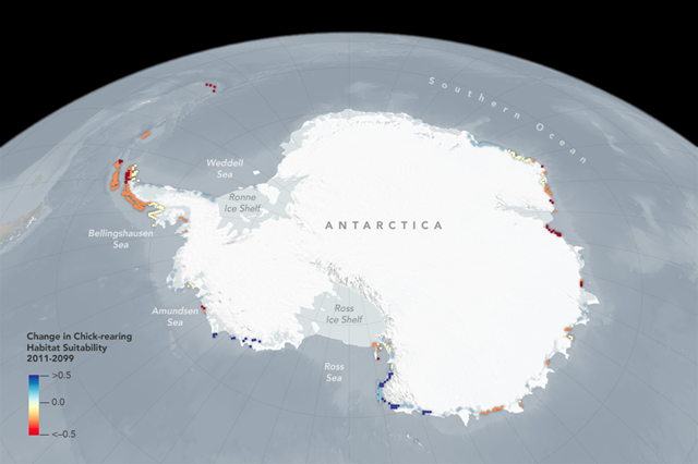 This graphic shows changes to the suitability of Adélie penguin breeding areas in Antarctica. Graphic: NASA Goddard Space Flight Center