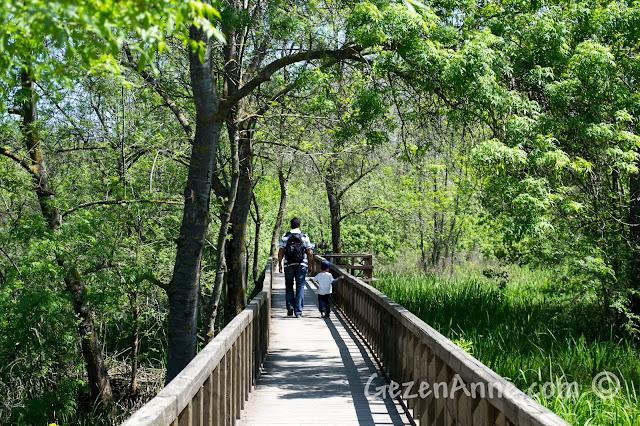 Sakarya Karasu'daki Acarlar Longozu'nda köprüde yürürken
