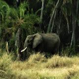 Elefante.Joan Gamell.jpg
