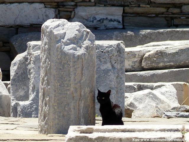 gatos-isla-de-delos-grecia.JPG