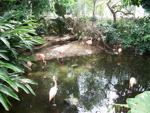 Flamingos at the National Aviary