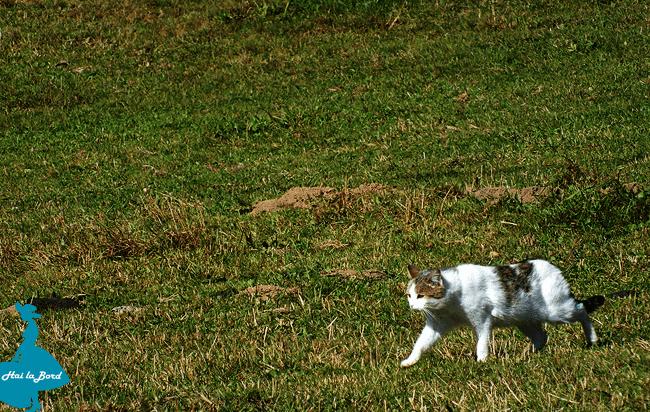 pisica fundatica