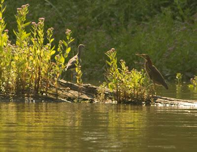 Hackensack River.