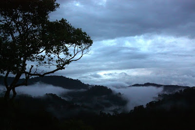 Sunrise over the treetops in Ulu Temburong National Park in Brunei