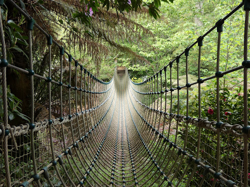 Ropebridge by Judy Boyle - Buildings & Architecture Bridges & Suspended Structures (  )