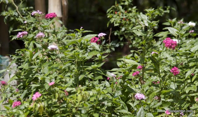 Scented Garden - IMG_1591%2Bcopy.jpg