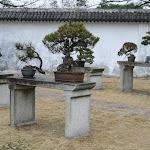 Ile Jiangxin : jardin des bonzaïs