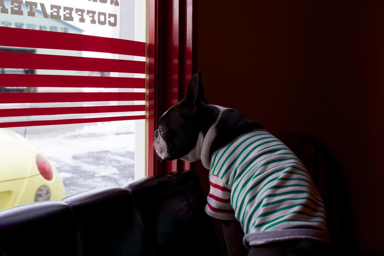 マスコット犬「イギー」