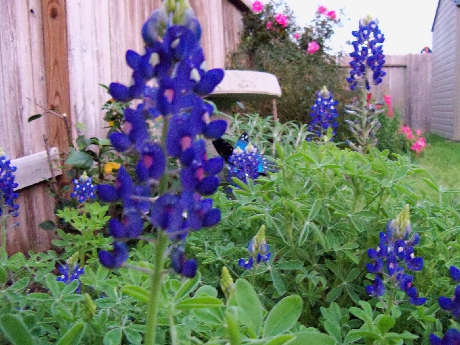 Gardening 2012 - 115_1268.JPG