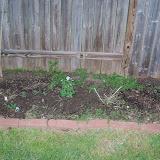 Gardening 2014 - 116_1138.JPG