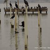 01-26-13 White Rock Lake - IMGP4293.JPG