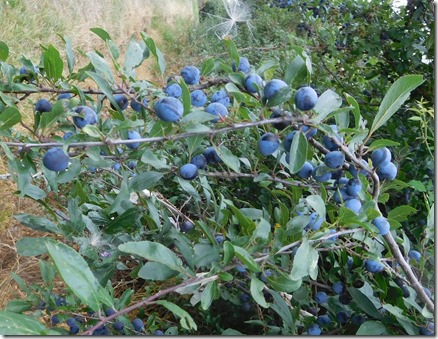11 good sloes this year