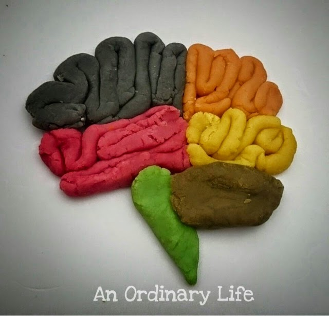 An Ordinary Life : Science: How does your brain work?