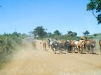 A bad and dusty road in close to Masai Mara National Reserve