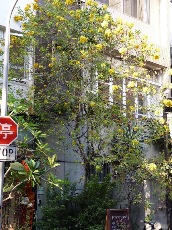 TAIWAN . TAIPEI,un dimanche après midi - P1160732.JPG